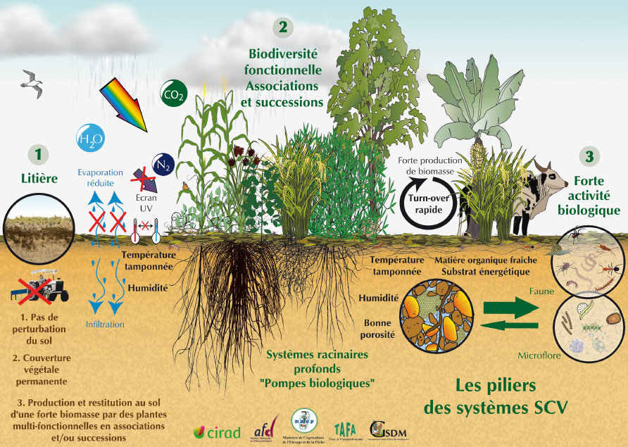 Promouvoir l'agroécologie et la permaculture dans la plaine du var